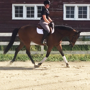 Equestrian Facility in Wappingers Falls, NY